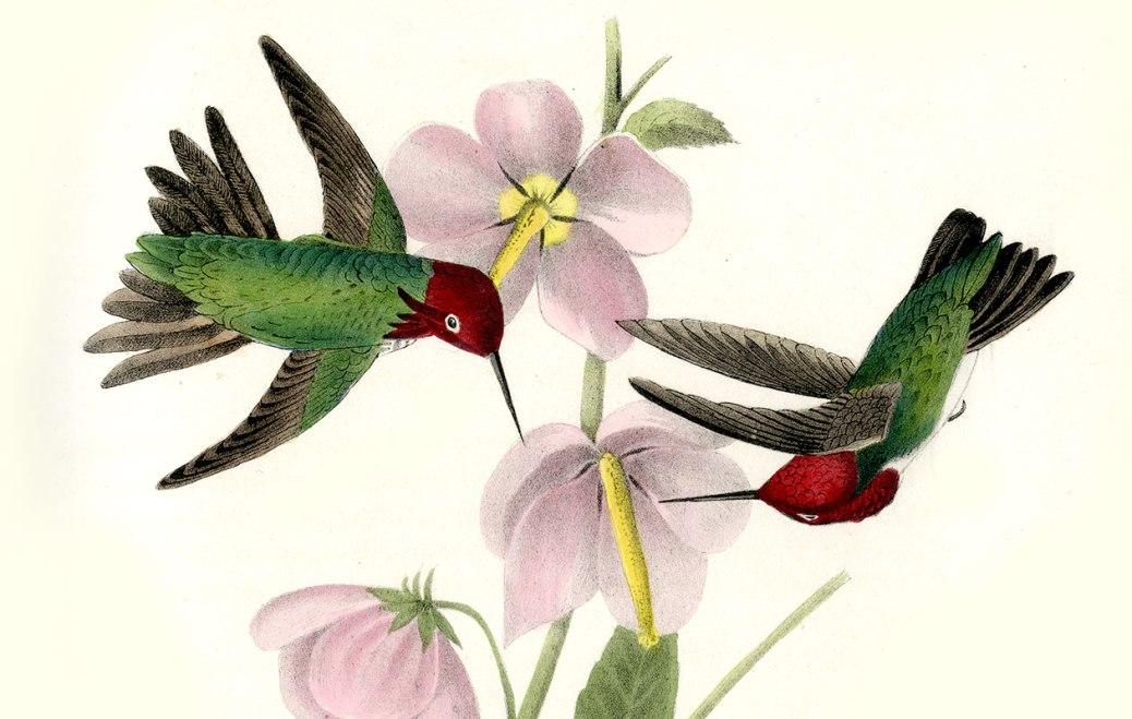 hummingbirds1260x800